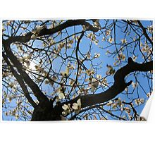 Blooming Tree Sunlight Poster
