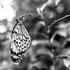 Butterfly 2 by jamesataylor
