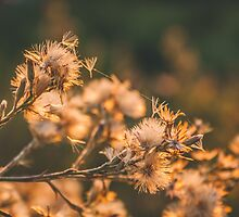 065 - Autumn mornings by CarlaSophia