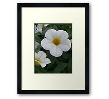 White Yellow Petunias Framed Print