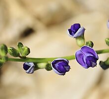 Purple Bloom - African Wild Flowers by LivingWild