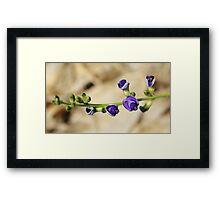 Purple Bloom - African Wild Flowers Framed Print