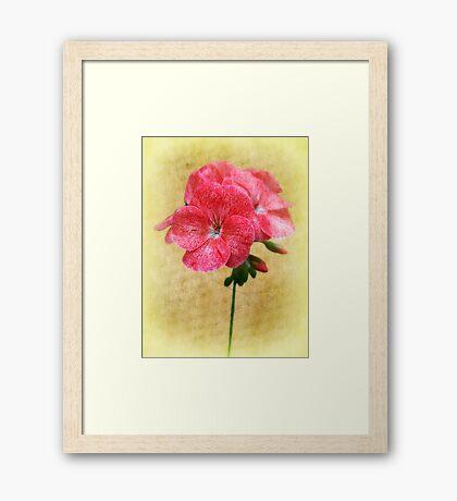 Bloom In Red Framed Print