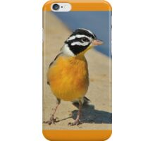 Golden Bunting - African Colorful Wild Birds iPhone Case/Skin