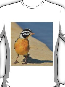 Golden Bunting - African Colorful Wild Birds T-Shirt