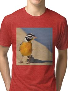 Golden Bunting - African Colorful Wild Birds Tri-blend T-Shirt