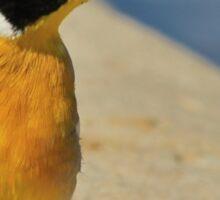 Golden Bunting - African Colorful Wild Birds Sticker