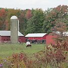 Down on the Amish Farm by Monnie Ryan