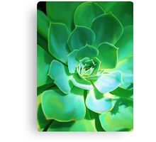 GREEN PLANT SUCCULENT Canvas Print