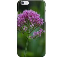 flower in summer iPhone Case/Skin