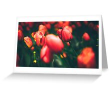 Tulip Flower Greeting Card