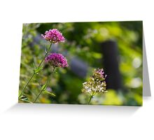 flower in summer Greeting Card
