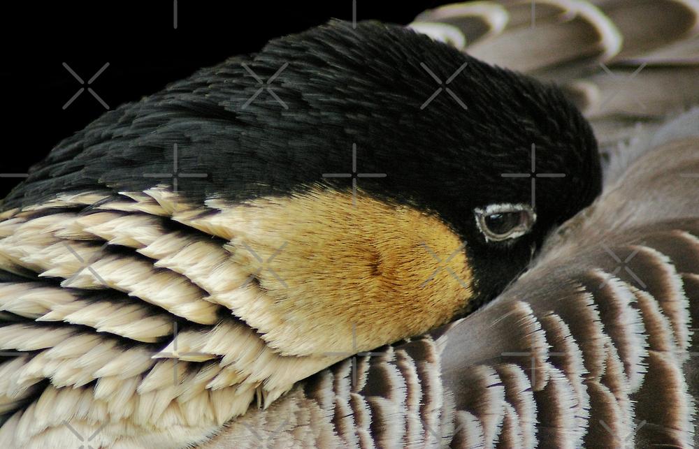 Sleeper Peeper by Yampimon