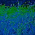 Blue Grass  by C J Lewis