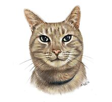 Colour Pencil Portrait of Opal the Cat Photographic Print