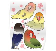 Lovebirds with cherry blossoms Poster