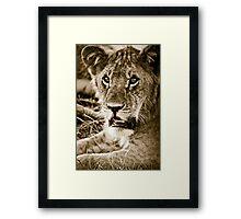 Lioness in Masai Mara, Kenia Framed Print