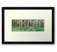 Forest Over the back fence Framed Print
