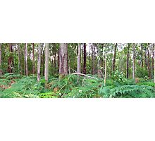 Forest Over the back fence Photographic Print