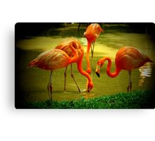 Carribbean Flamingos Canvas Print