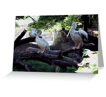 Pelican Roost Greeting Card