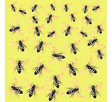 Wasps calling!  exclusive design! Photographic Print