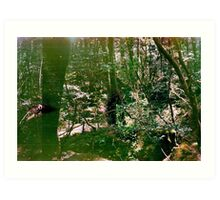 Aokigahara (Suicide Forest) Art Print