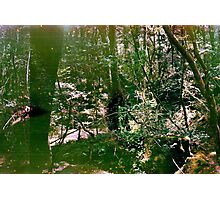Aokigahara (Suicide Forest) Photographic Print