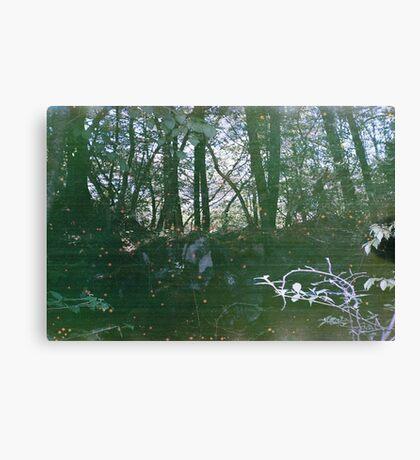 Sea of Trees Canvas Print