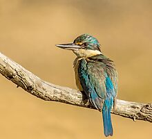 Afternoon Kingfisher by Rick Playle