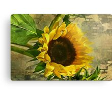 Be The Sunflower  Canvas Print
