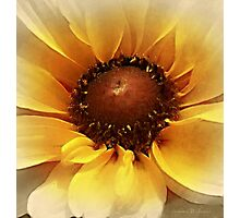 Mellow in Yellow Photographic Print