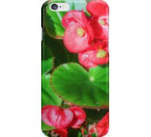 Wax Begonia iPhone Case/Skin