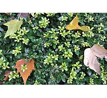 Nature leaf Journal Photographic Print