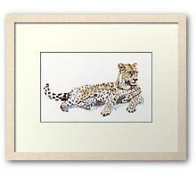 Leopard {Panthera pardus} Framed Print