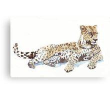 Leopard {Panthera pardus} Canvas Print