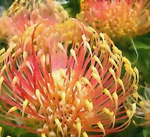 Protea in water colour by PeterWhy