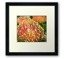 Protea in water colour Framed Print