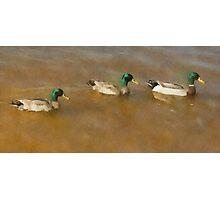 Ducks in Water Photographic Print