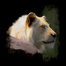 Wild White Lion by NaturePrints