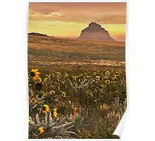 Black Eyed Susans Pawnee Buttes Poster