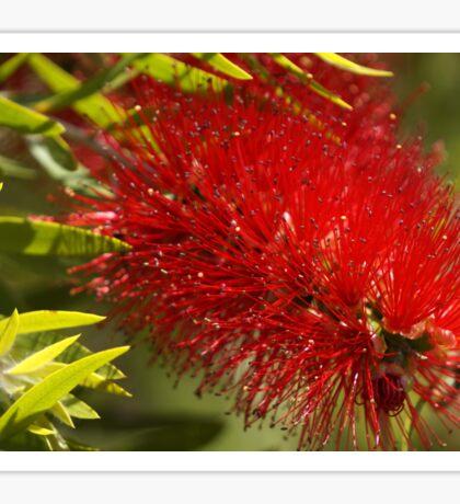 Bottle brush flower Sticker