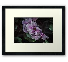 White flowers Leith Park Victoria 20160911 7499  Framed Print