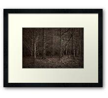 Dusk Forest View Framed Print