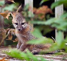 Bashful fox kit by wolftinz