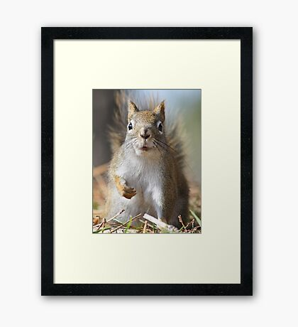Wait baby, you have me all wrong, it wasn't me Framed Print