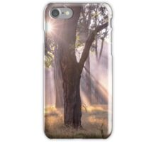Light Streaming through trees iPhone Case/Skin