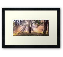 Light Streaming through trees Framed Print