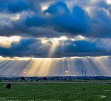 Sunbeams over Sheppey by Sue Martin