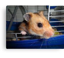 Blu Fondue, the beatnik hamster Canvas Print